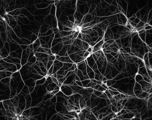 Neuron image used as inspiration